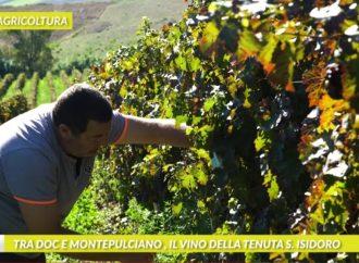 LA TENUTA SANT'ISIDORO DI TARQUINIA PROTAGONISTA DEL TG AGRICOLTURA
